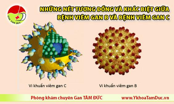 bệnh viêm gan B bệnh viêm gan C HBV HCV
